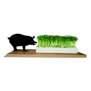 Kresseschale smart n green Schwein von side by side: mit Schwein-Silhouette, Spitzahorn-Brett und weißer Porzellanschale. Gefüllt mit Kresse.